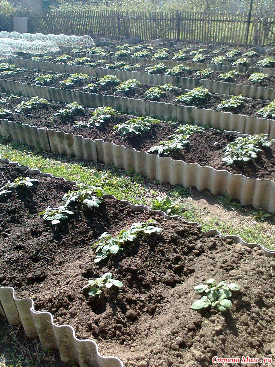 История земледелия в отдельно взятом