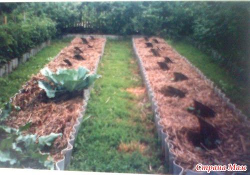 История земледелия в отдельно взятом огороде. Часть 3. Картошка.