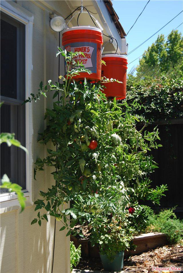 Овощи вверх ногами / хобби / eva.