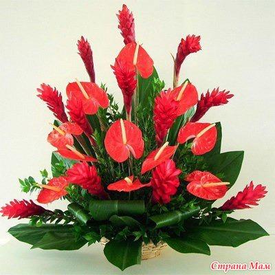 10 растений, которые принесут в ваш дом любовь. - Комнатные растения. - Страна Мам