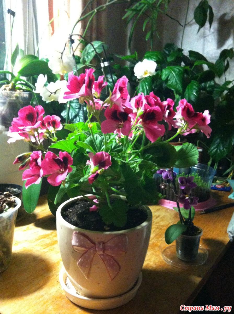 Цветы для юго-западного окна