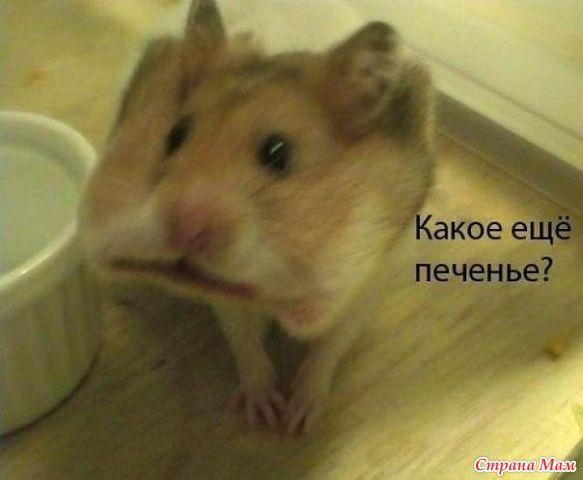 http://st.stranamam.ru/data/cache/2013nov/06/53/9984442_49977.jpg