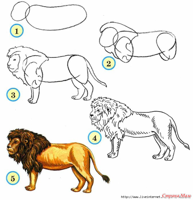 Поэтапно рисунки животных