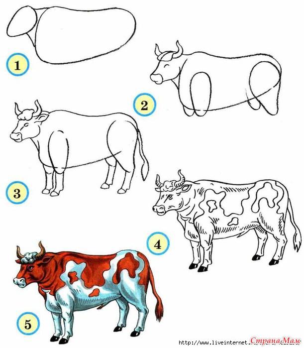 Как рисовать быков