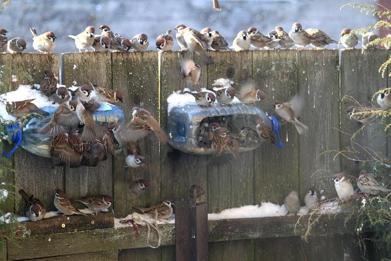 Чертежи для кормушки для птиц своими руками