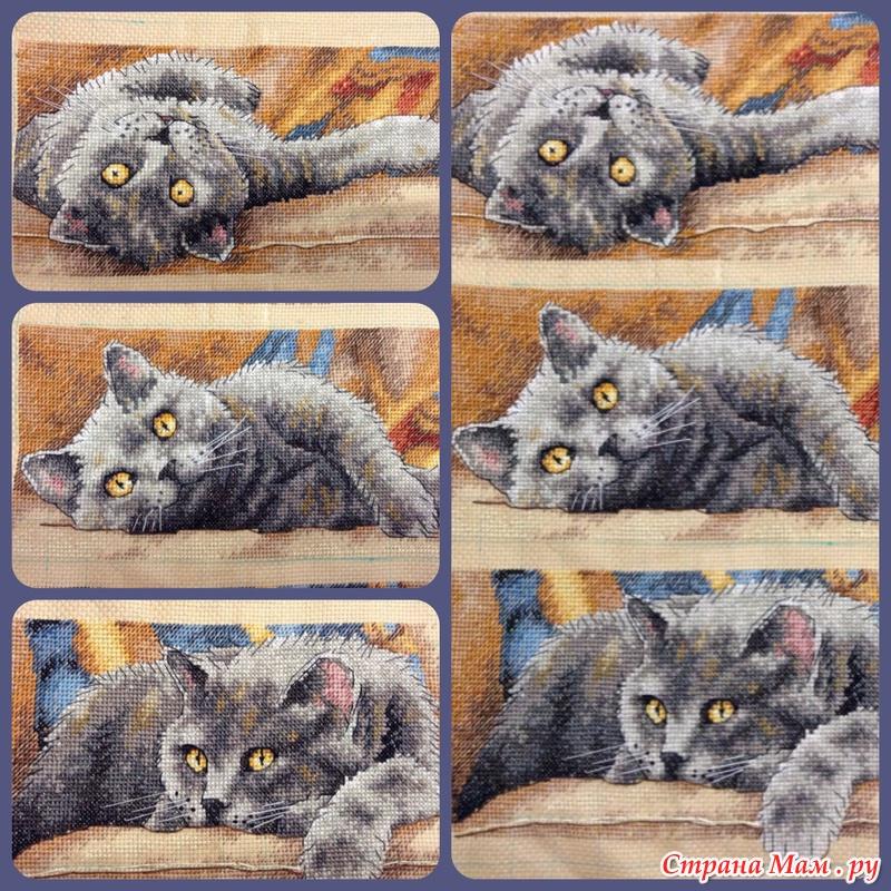 Вышивка крестиком кот макс 22