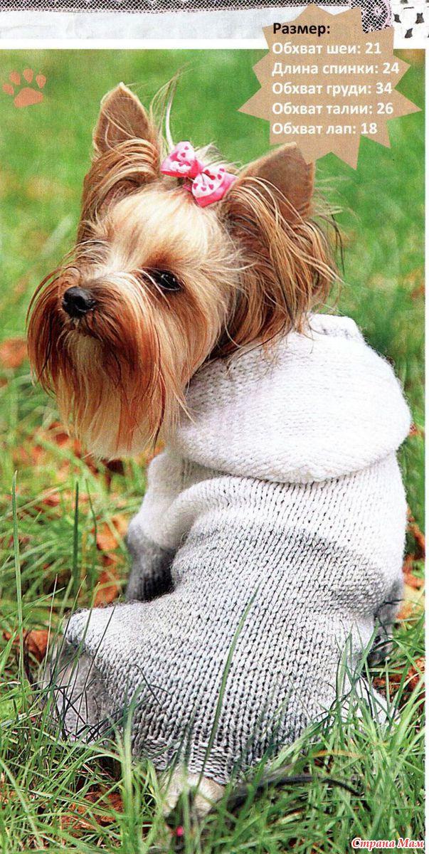 Вязаная одежда для йоркширских терьеров схемы