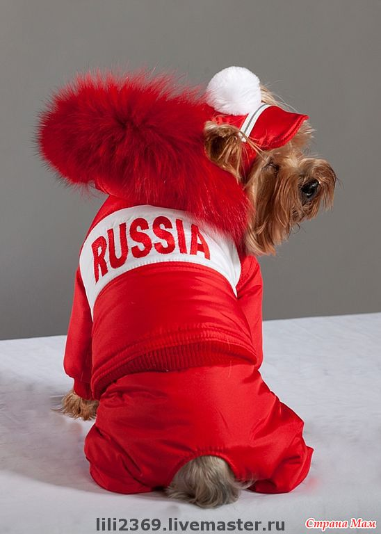 Одежда для собак зимняя своими руками