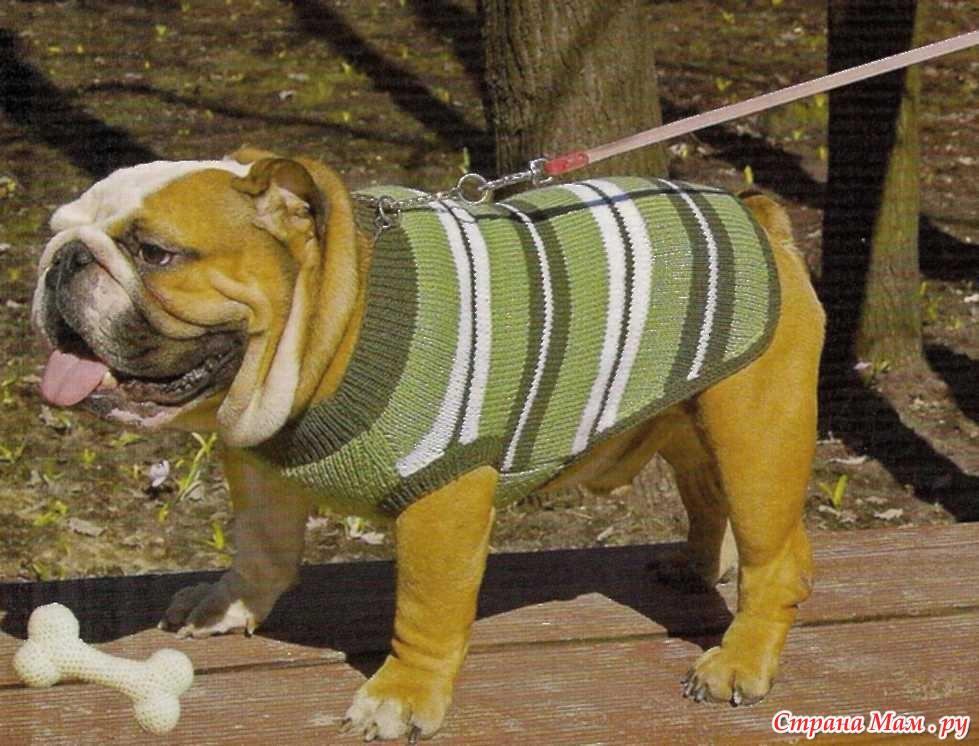 Как связать свитер для бульдога