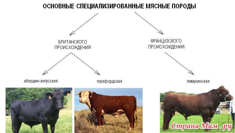 айди таблица привесов бычков на откорме породы голштино фризские управления химико-технологическими