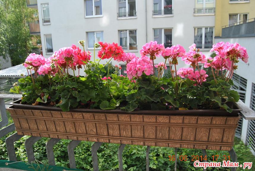 Мои любимые растюшки!!! - комнатные растения. - страна мам.