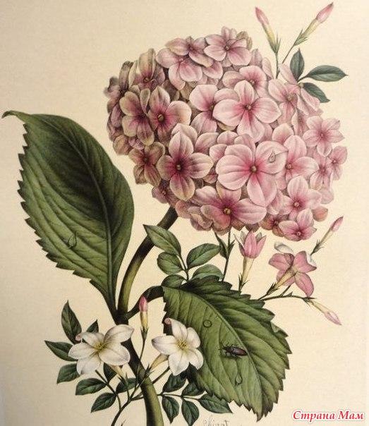 Цветы винтажные картинки для декупажа