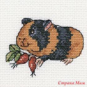 Вышивки с морскими свинками