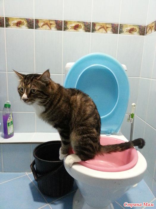 Что делать чтоб не пахло кошачьим туалетом 160
