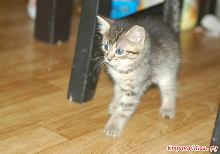 К чему снится Кошки - видеть во сне Кошки - толкование