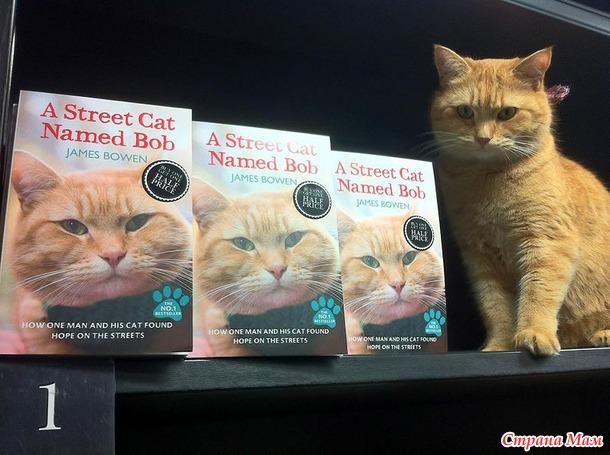 Уличный кот по имени боб как человек