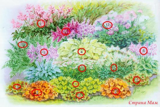 Три идеи для цветника