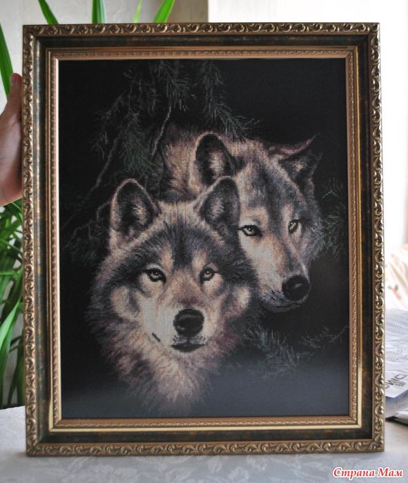 Оформленные волки!