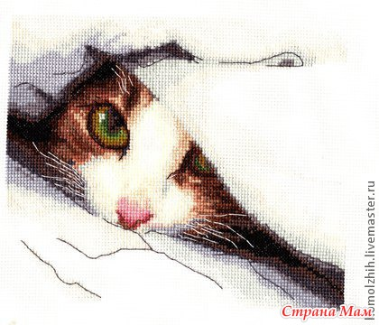 Тайская кошка (Riolis)