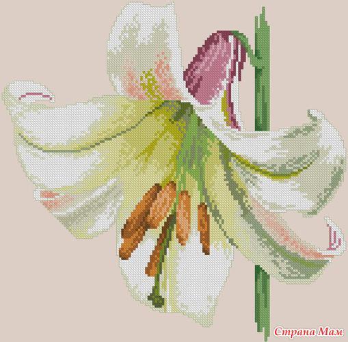 вышивкa крестом - цветы лилии
