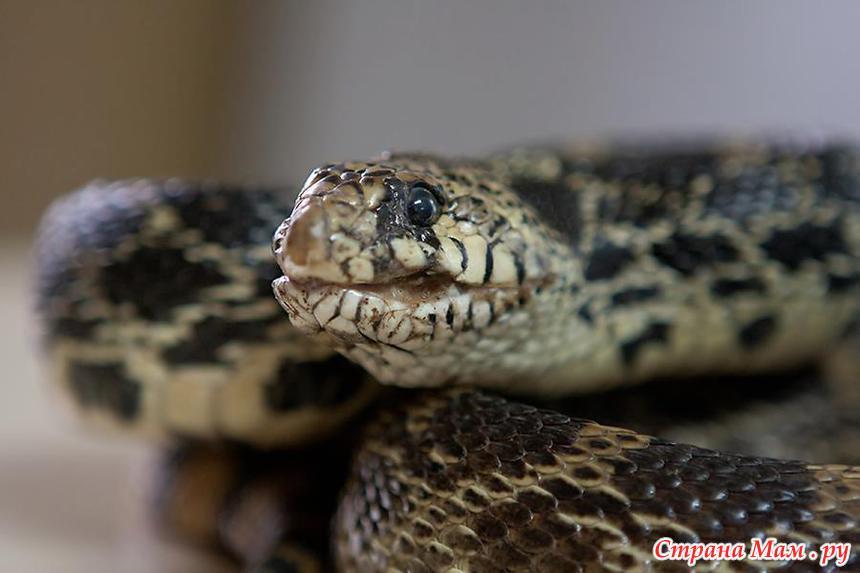 О лечении стоматита у змей.