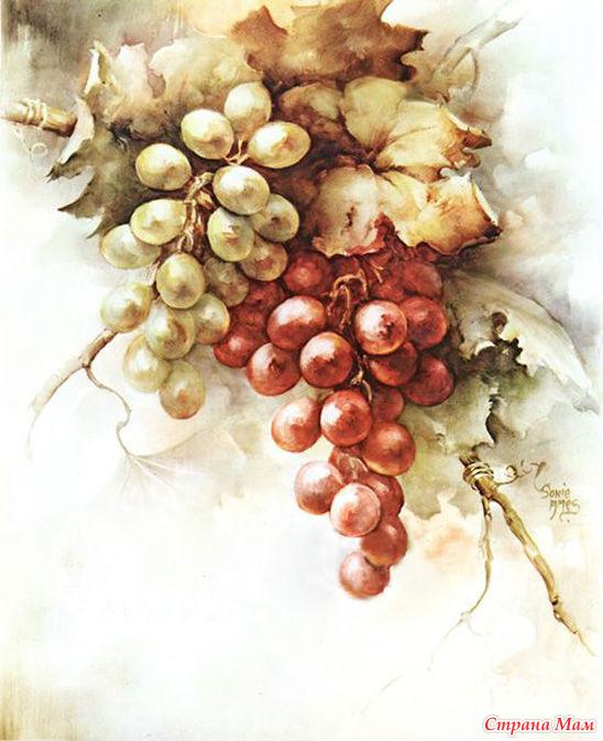 Виноградная лоза картинки для декупажа