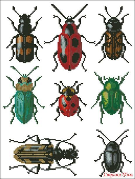 *Насекомые (жуки)