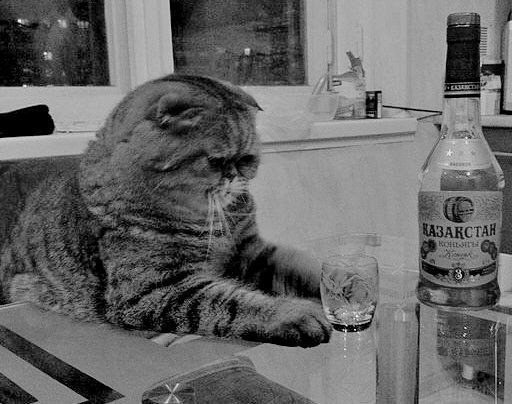 Одинокий кот картинки