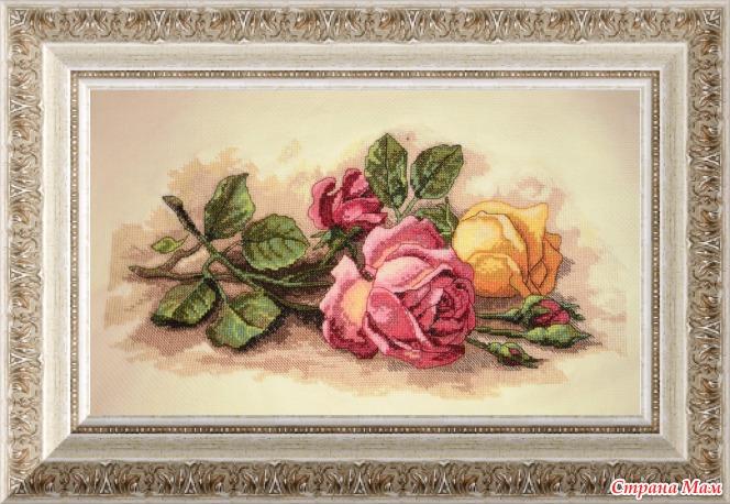 Dimensions срезанные розы купить доставка цветов в городе улан удэ