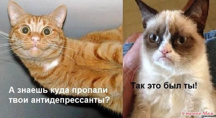 кот сердитый фото