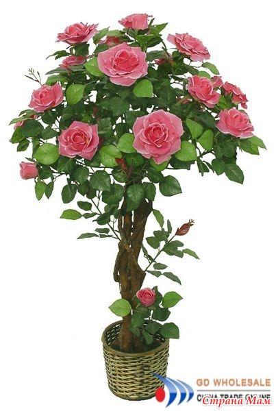 Дерева роза комнатная уход в домашних условиях