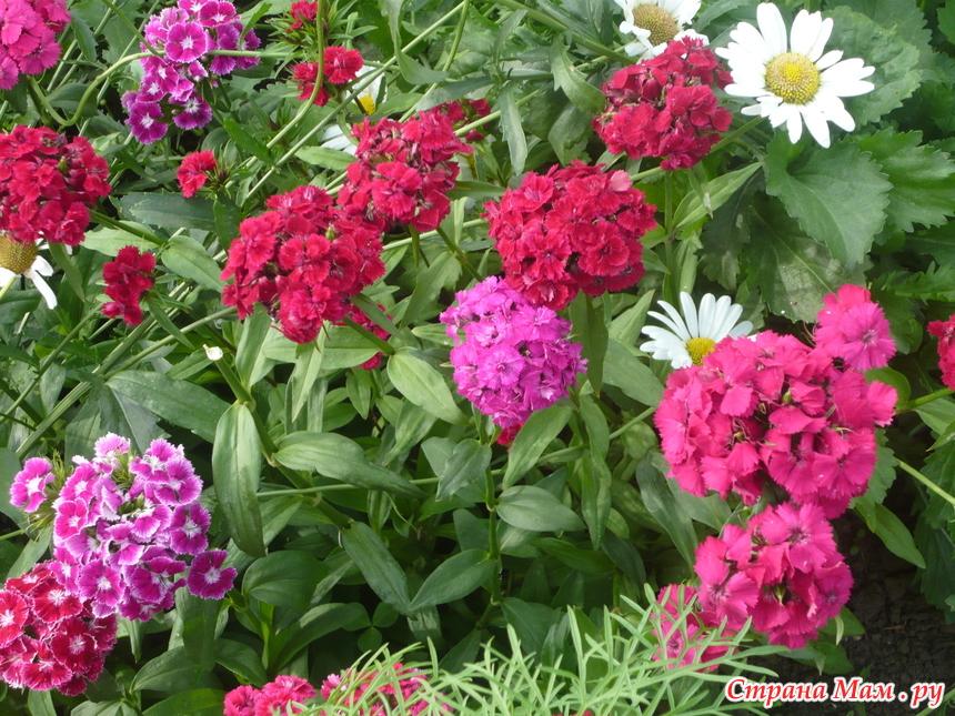 Уход за однолетними и многолетними цветами