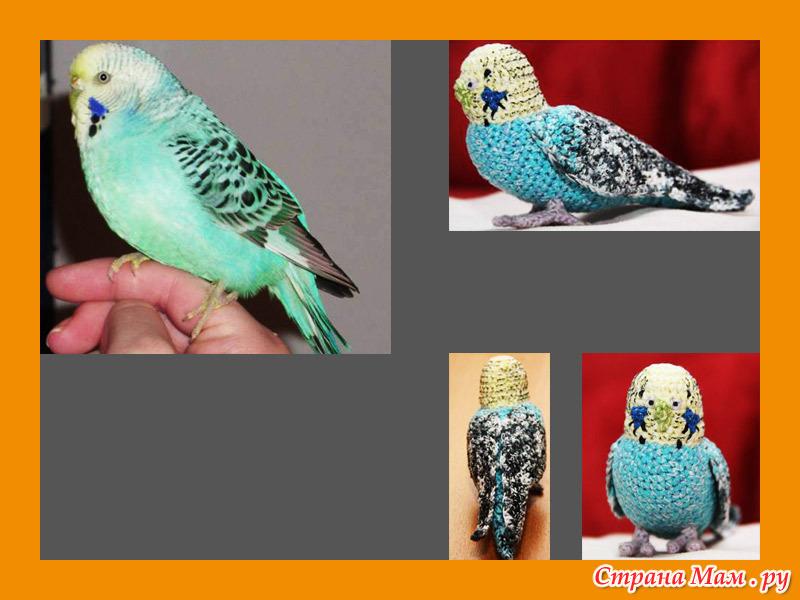 Попугай корелла крючком