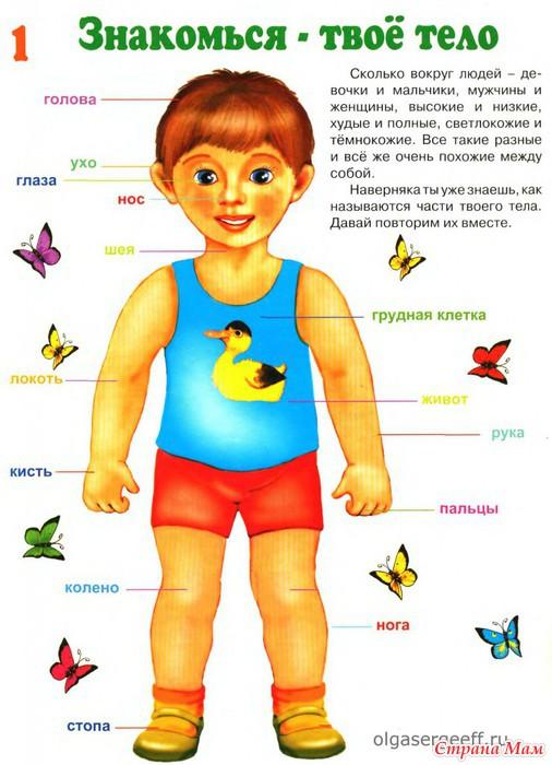 Стих детям что такое наше тело
