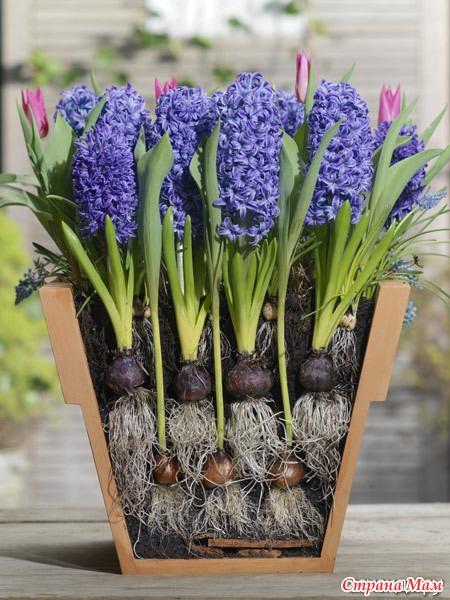 Посадить цветы к 8 марта