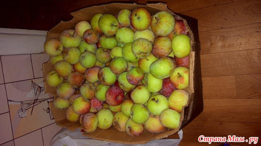 Домашние вина из яблок: рецепты яблочных вин, как