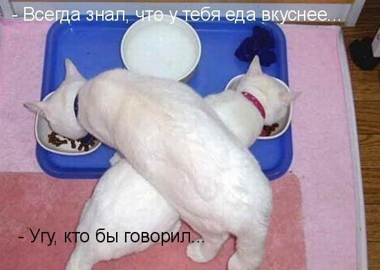 ПОДДЕРЖКА ПРИКАТИЛА...
