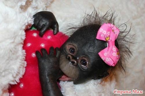 Что одевать в новый год огненной обезьяны