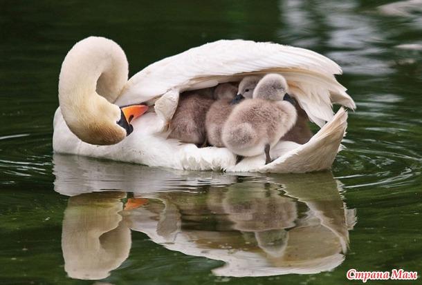 Картинки о природа животные цветы онлайн