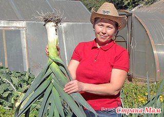 Советы от дачницы, которая знает толк в выращивании лука!