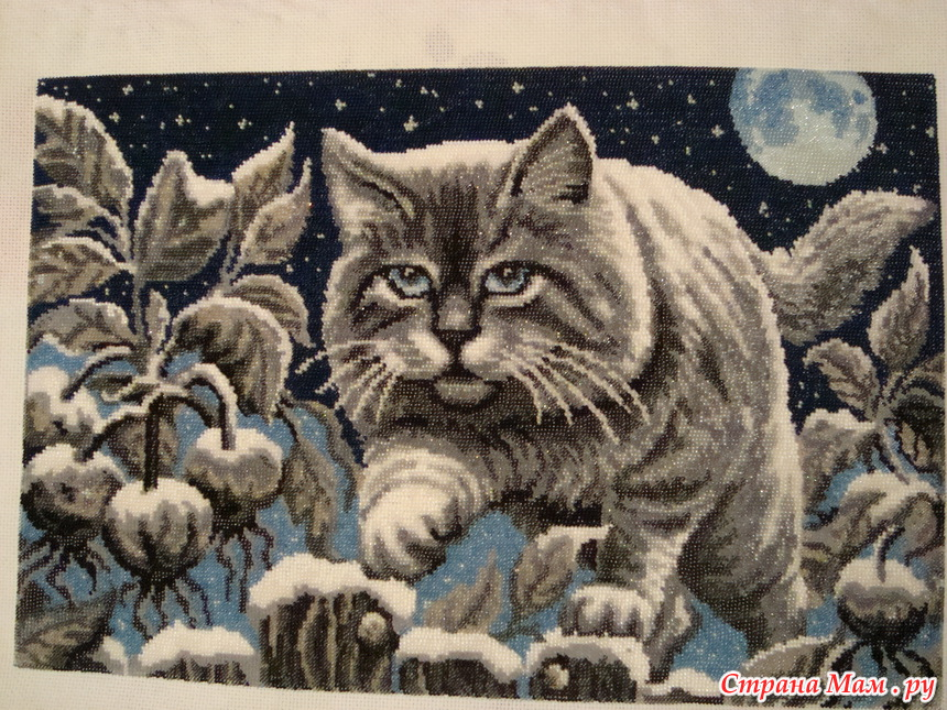 *Лунный кот