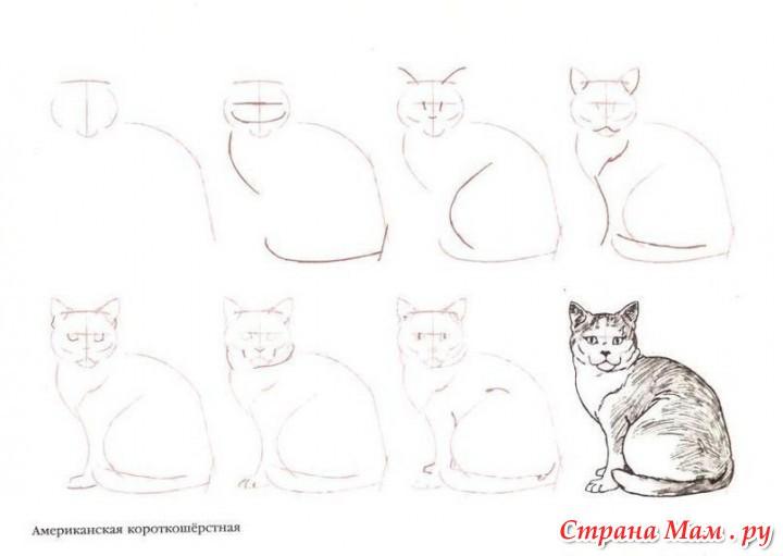 Фото кошек как нарисовать