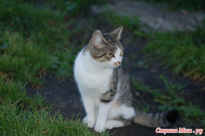 Сонник кошка, к чему снятся кошки? Видеть во сне кошек