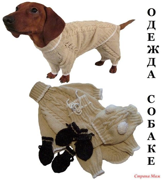 Схема вязания костюма для таксы 95