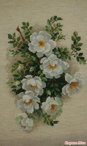 Белый шиповник вышивка риолис