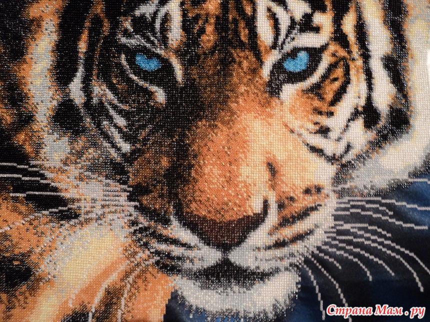 *Голубоглазый тигр. Бисер