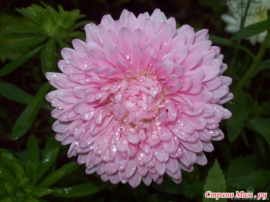 """钩针教程:胸针""""奢华的花朵"""" - maomao - 我随心动"""