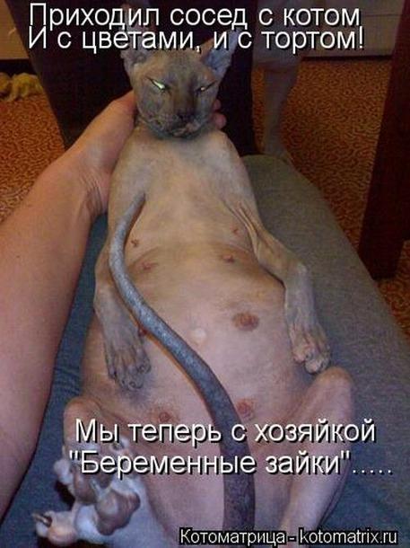 Если кошка прыгнула на живот беременной