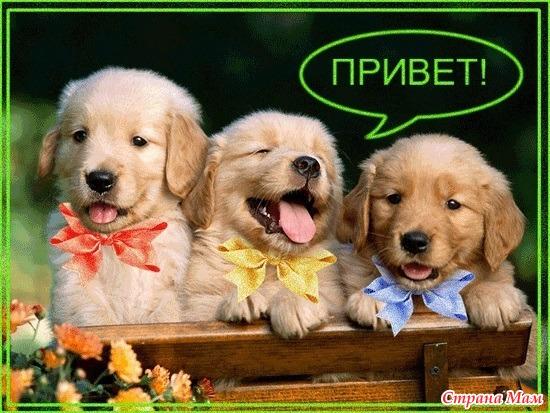Лесная нимфа в Шервудском лесу)))