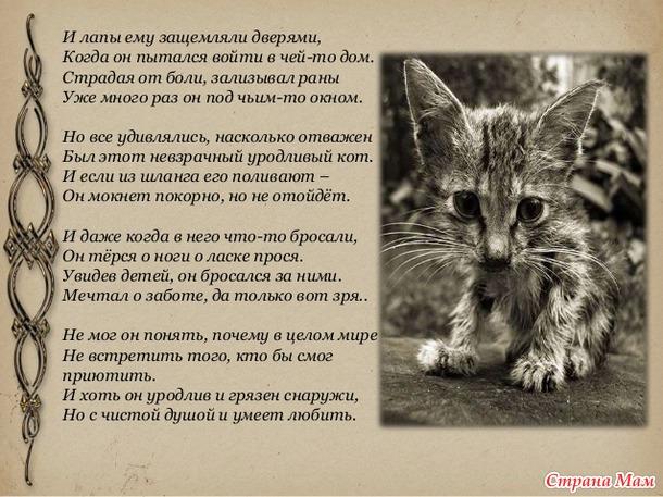 Любящий кот стих